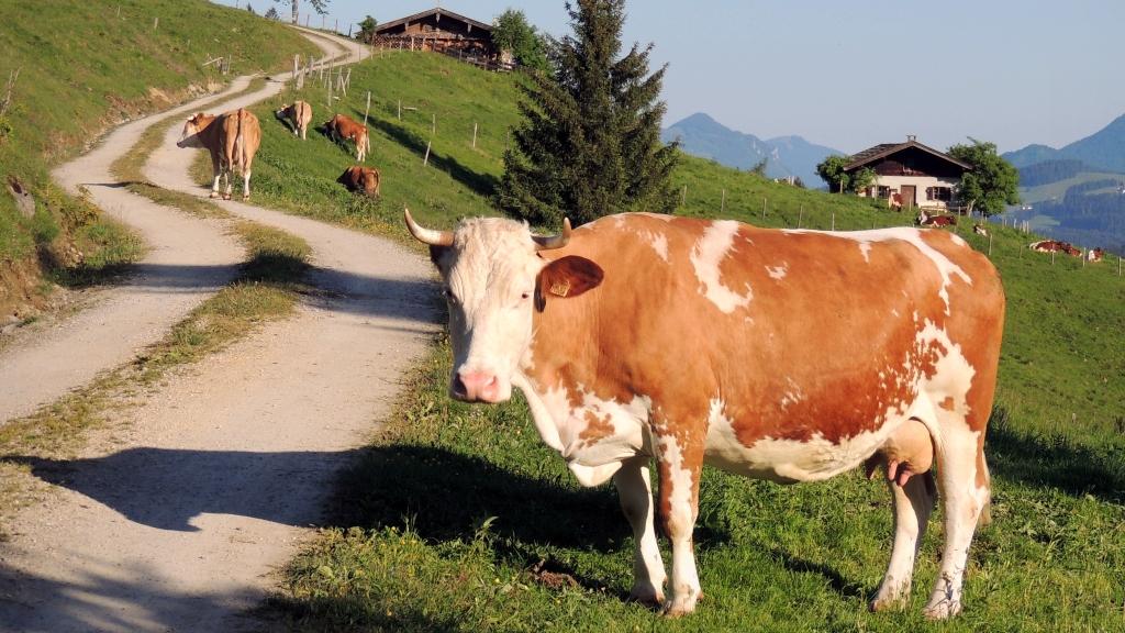 İsviçre'de yeni moda Vegan Süt