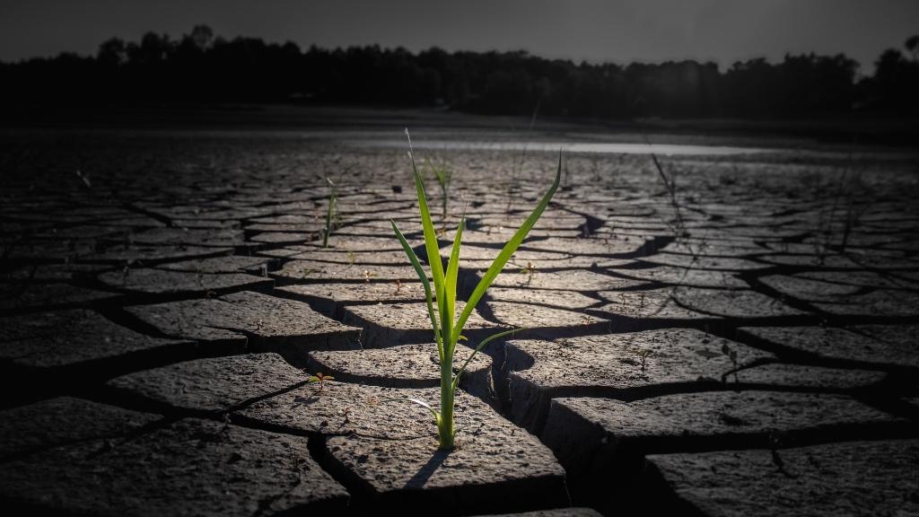 İklim krizi: Kuraklık ve çaresizlik çiftçileri göçe zorluyor