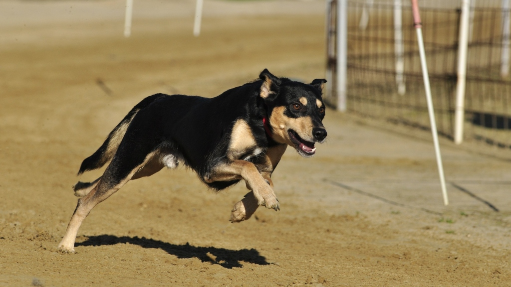 Köpek saldırılarında artış yaşanması endişe veriyor! Peki suçlu kim?